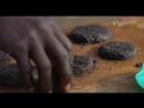 Вы не поверите Стейк по Африкански Хз что за летающие насекомые возможно мотыль а возможно москиты