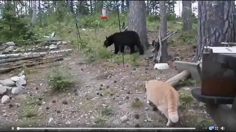 Мыши для слабаков - русский кот любит медвежатину.