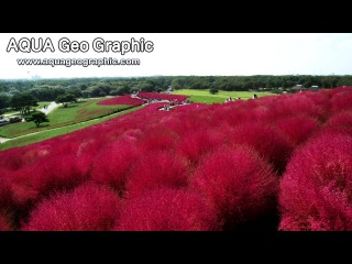 Hitachi Seaside Park in Autumn ( Shot on RED ONE )