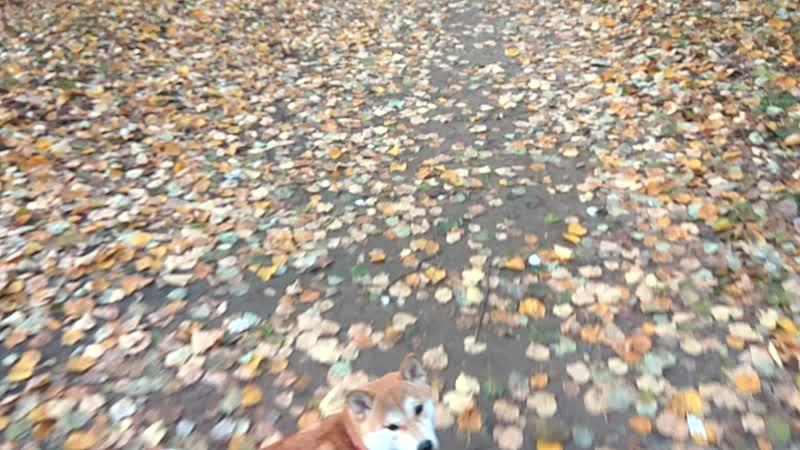 Мы с Микушей в Бирюлевского парке