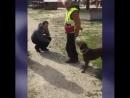 Собака потерявшаяся 2 года назад вспомнила хозяина