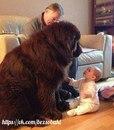 Петя очень хотел себе собаку, и наконец, на Новый год ему подарили огромного пса.