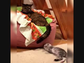 Он ещё маленький -) Так что пока терпи котик -)