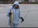 МК : Ловля щуки по первому льду