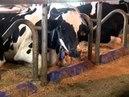 Globo Rural Ordenha Voluntária - Produtor de leite utiliza ordenhadeira comanda por robô