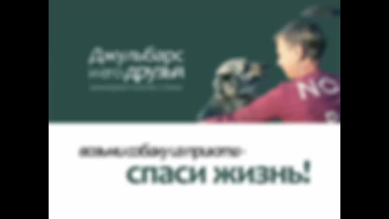 """приют -хоспис """"Джульбарс и его друзья"""" Омск"""