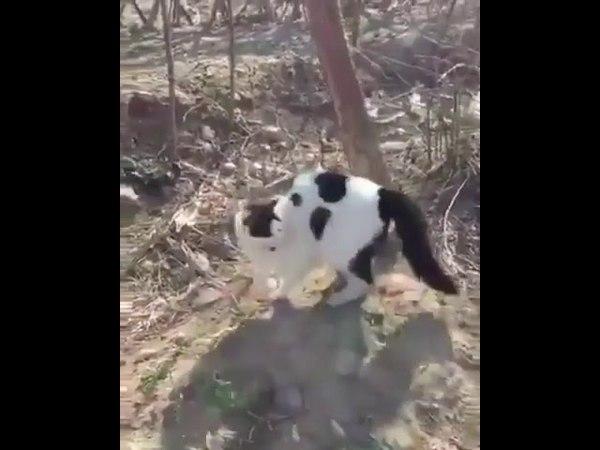 Свора котов опаснее одной собаки. Смотрим другие ролики, подписываемся.