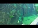 Крокус Сити Океанариум. Часть 1 - Рыбы рек и озёр