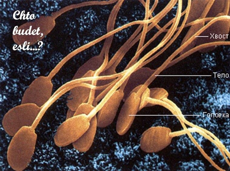 Что будет, если сперму вколоть внутривенно?