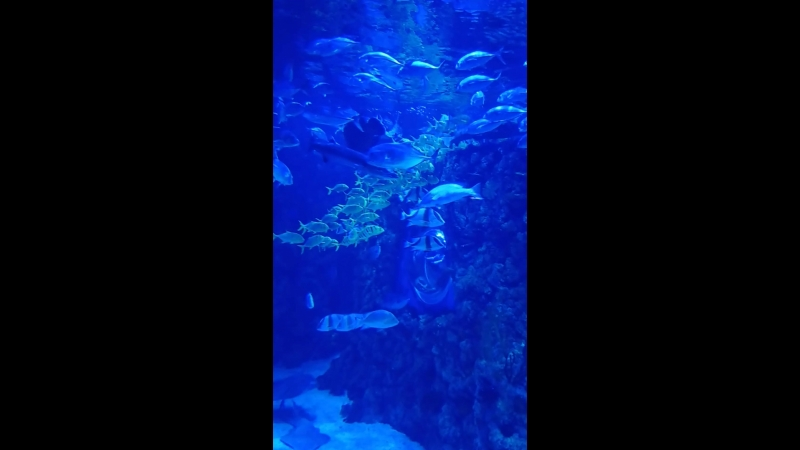 Океанариум 1