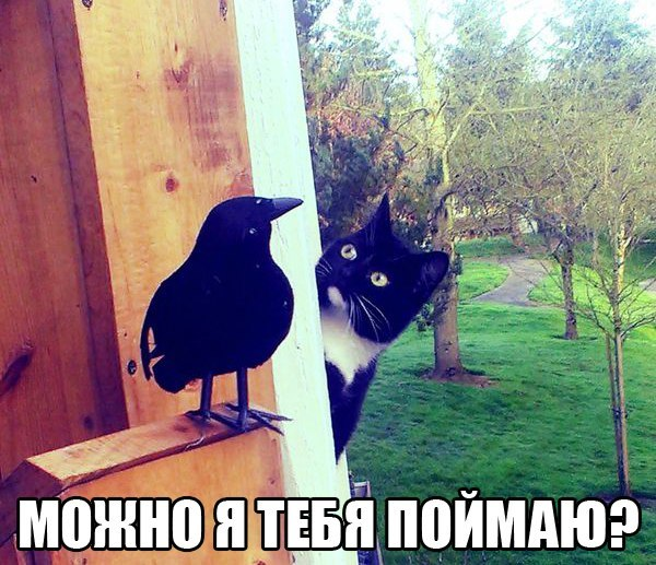 http://cs14114.vk.me/c7005/v7005808/3c7d5/zNYg8Ily5ME.jpg