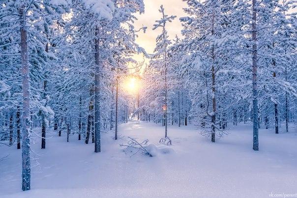 «Сибирская зима». Ханты-Мансийский автономный округ. Автор фото: Павел Антропов.
