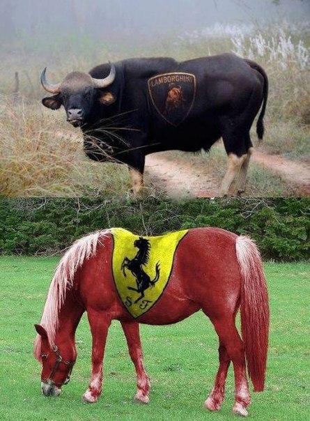 😆 Lamborghini VS Ferrari