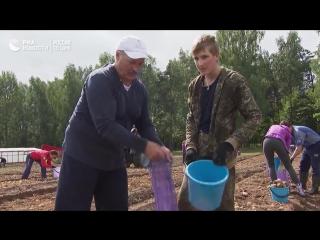 Александр Лукашенко с сыном поучаствовали в уборке картошки