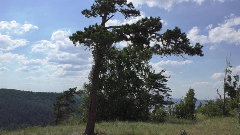 Поход Фёдора Безрукова на гору Стрельная. Жигули. Стихи, песня, клип Виктора Куликова