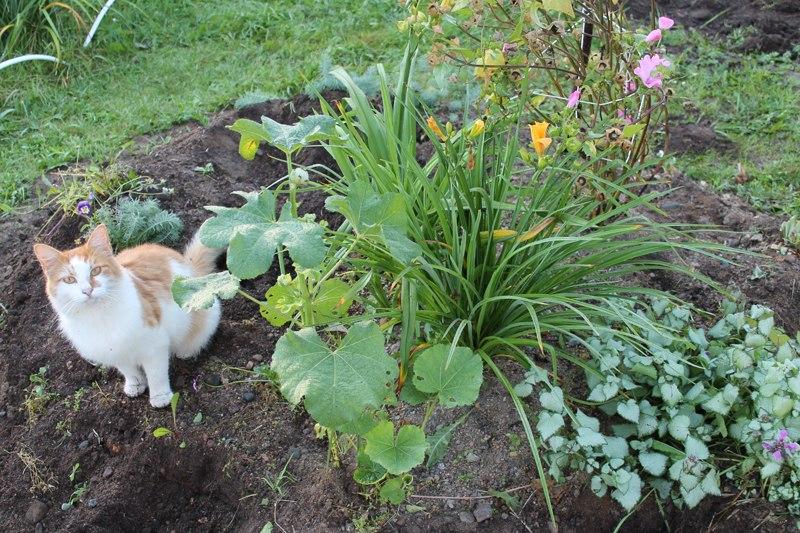 Фотоальбом «Осень - а что в саду и огороде»-Рассадила старый цветник
