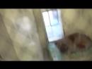 Преданный пес не выдержал и заплакал после того как понял что его бросили