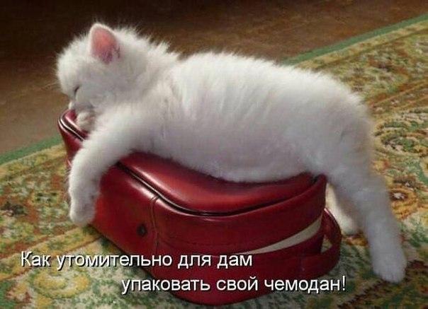 https://pp.userapi.com/c543101/v543101299/7ad2/biX2rAF5GgY.jpg