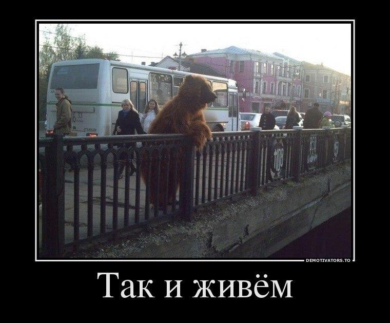 Котята мейн кун москва всегда самый опасный