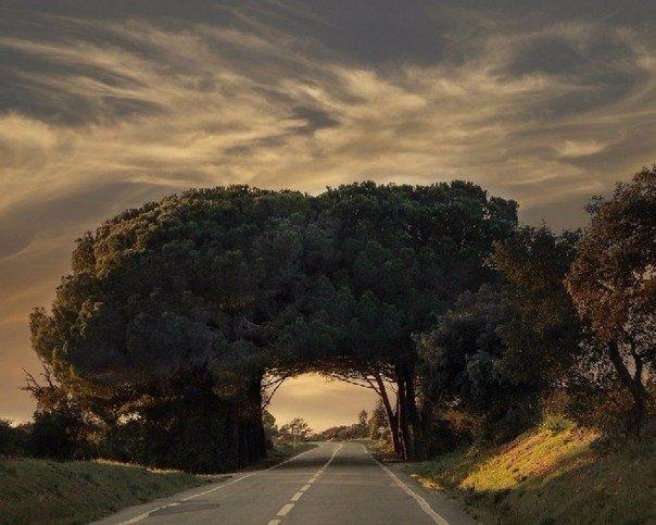 Ծառերից պատրաստված ամենագեղեցիկ թունելները (ֆոտոշարք)