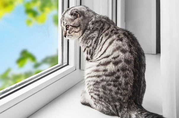 Почему коты уходят из дома и не возвращаются Приметы, толкование