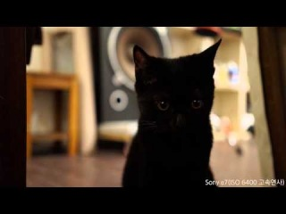 SONY A7 TEST VIDEO