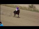 Сегодня. Скачка девушек. Фрагмент на финишной прямой. Ирина Сатарова и Аманат выигрывают скачку на 1600 м!