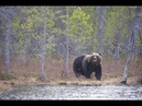 2 реальных случая (охота на медведя)