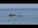 Дельфины на пляже в Крыму!
