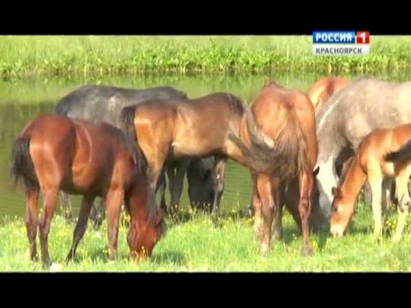 Татары Пировского района