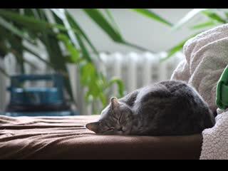 В России кошка заболела коронавирусом и попала под карантин