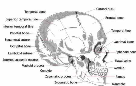 Синдром Пфайффера - это генетическое состояние, которое вызывает преждевременное слияние костей черепа, что может привести к черепно-лицевым нарушениям.