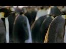 Onyx Is Here ( Penguins) пингвины рэп музыка животные прикол coub