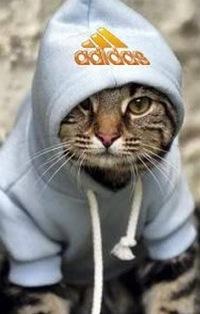 картинки крутой кот