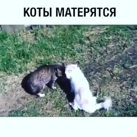 """Ясаков Александр on Instagram: """"‼️ДО КОНЦА‼️🤣 Серьёзный замут котов🐱🐱🐈🐈🤗🤗 Делись видео с друзьями 🐶 и ставь ❤️ • • 👉 Подписывайся: ↘️↘️⬇️⬇️⬇️⬇️↙️↙️..."""