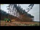Corte muito rápido de eucalipto - Feller John Deere 643K!