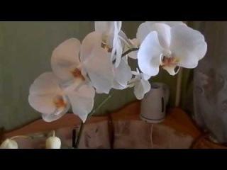 Мои комнатные цветы и цветок по имени задрот