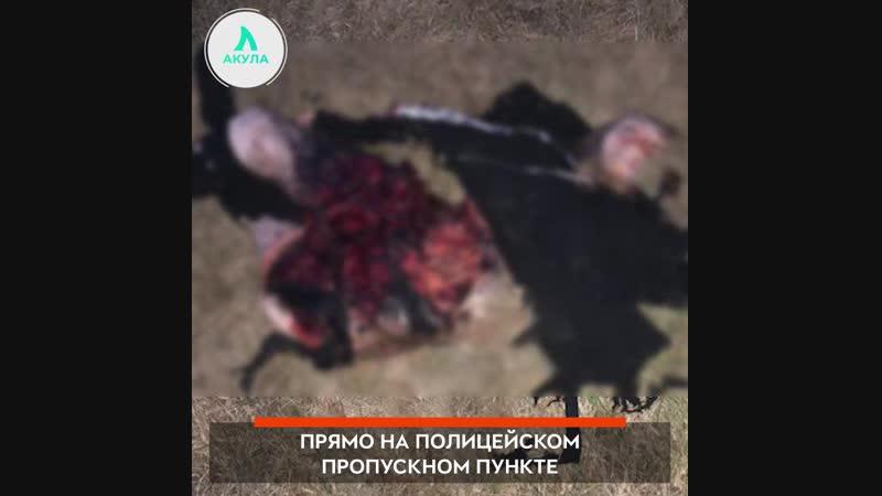 Смертница в Грозном АКУЛА