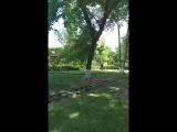 Ждём в парке Тополя