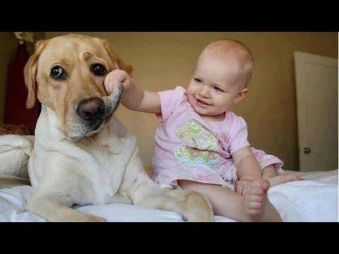 Bayi Lucu Anjing Mengganggu - Anjing Lucu