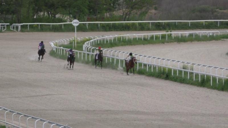 12.05.2019 - Ограничительный приз на лошадях 3-х лет чистокровной верховой породы - Хоттабыч