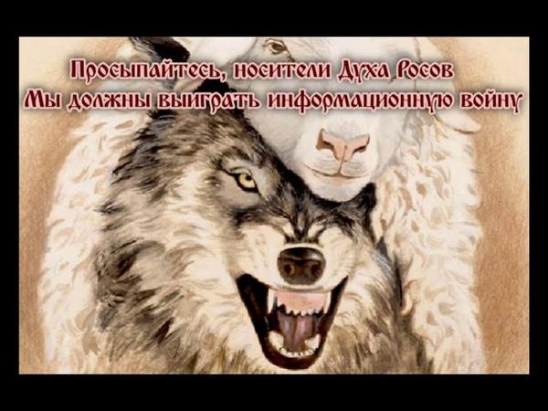 О дубах и Волках