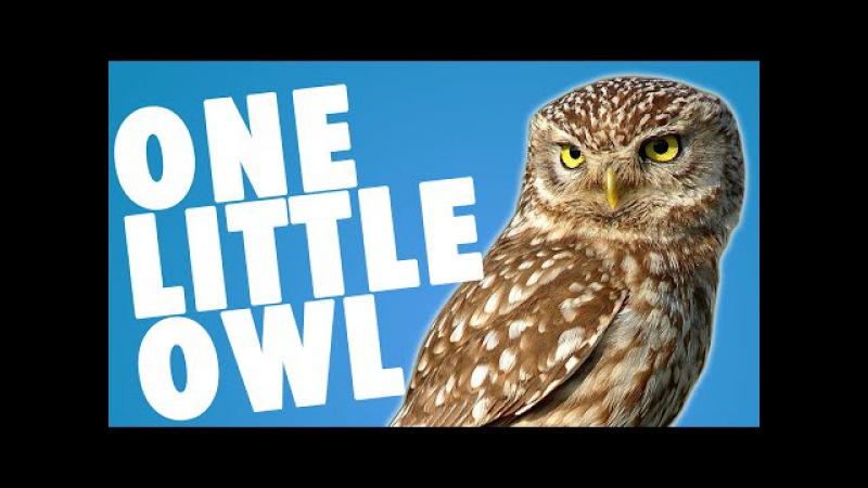 Nursery Rhyme Finger play - One Little Owl by Alina Celeste