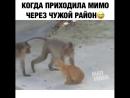 Мартышки и очк кота