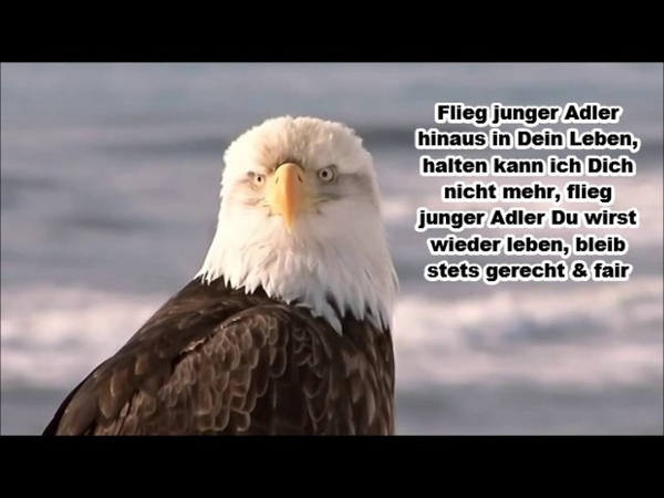 Tom Astor - Flieg junger Adler (Lyrics)
