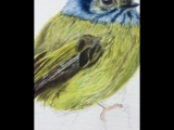 Just a little sneak pic of my new yellow birdie!Its so hard to hold a phone in one hand and paint with the other - couldnt st
