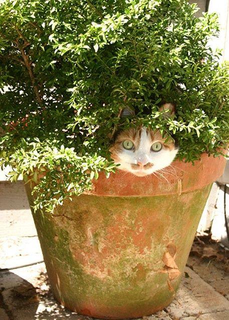 коты и цветы AYYKbAFpnhk