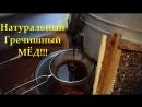 Качаем Славный МЁД