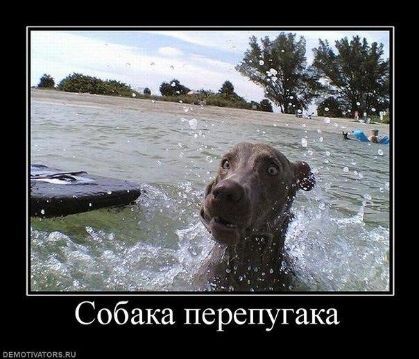 Собака-перепугака