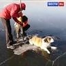"""ВЕСТИ РОССИЯ 24 on Instagram """"В Чите спасатели вытащили из озера Кенон вмерзшую в лед собаку. Невероятно добрая новость! ВестиRu"""""""